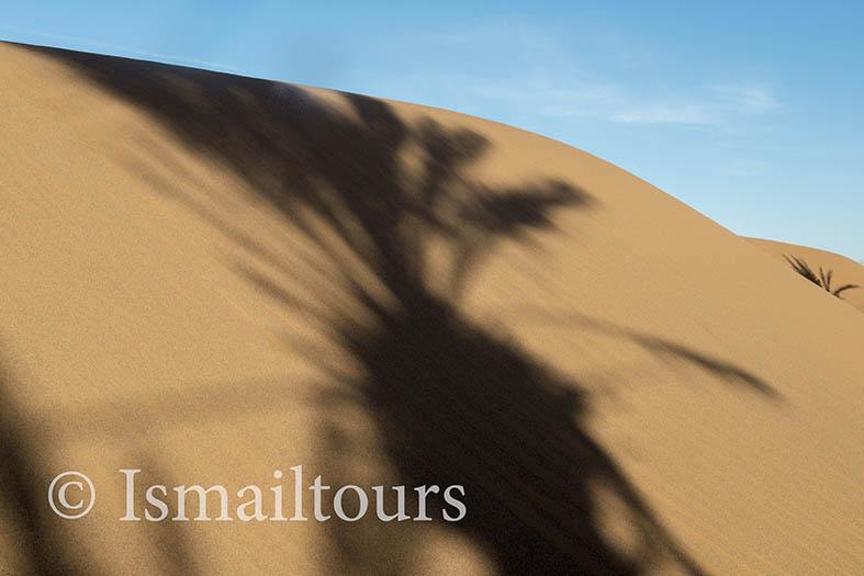 marokko,, Mhamid, 20150313.  Woestijn landschap, Palmboom schaduw in het zand. Palmtree shade in the desert. Desert landscape. Naamsvermelding verplicht; Foto ; Sabine Joosten/Hollandse Hoogte